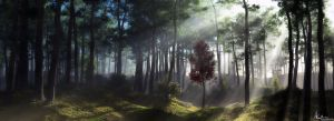 A walk in the woods by AronKamo