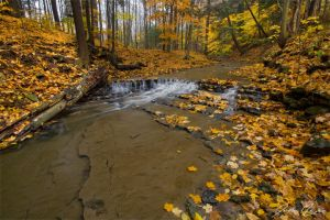 Autumn Creek by JohnMeyer