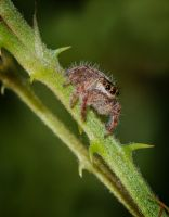 A Jumper Between Two Thorns by drhine