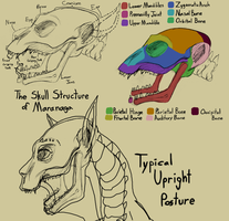 Maranaga Skull Diagram by SpidersVore