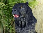 PantherMED by EscapeDesignFX