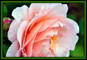 Raindrops and Petals by MayEbony