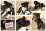 Douglas Medium Floppy Dogs - Rudy Pit Bull by The-Toy-Chest