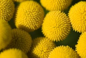 Round Yellow Things by netrex