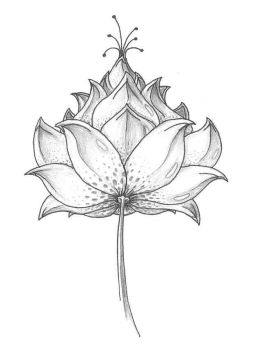 Lotus by Sheuron