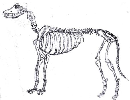 dog skeleton by LarasSilverStars