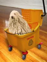 Doggie Mop by Agent-Spiff