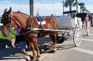 Horse with Carriage STOCK2 by KarahRobinson-Art