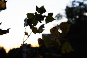Eisweder - Leaves in the wind by JustAnOrdinaryLife