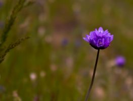 Purple stands alone by zootnik