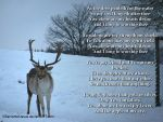 As the Deer by ServantofJesus