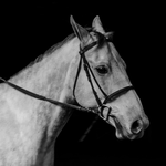 HFF Horse Profile by PoultryChamp
