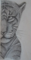 Some thing about a tiger by Girlwithrockinguitar