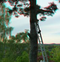 Tree with ladder (anaglyph) by EliteJohan