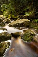 Stream - Snug, Tasmania by alexwise