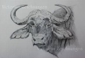 African buffalo - finished by LittleMissRaven