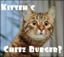 Kitteh c cheez Buger? by Tiernz