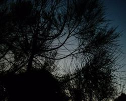 Venus Through the Pines I by copperphoenix