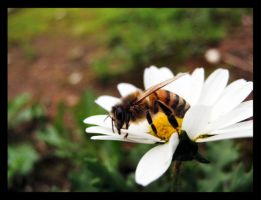 Bee by Pianochick66