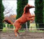 River - Stock 14 by Horses--Stock