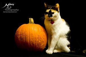 Fiona Happy Halloween 2 by Nebey