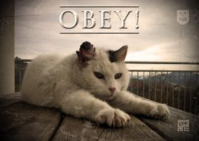 OBEY! by rotane