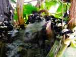 Baby Birds by dannypyle