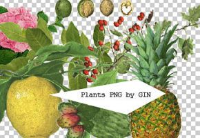 Plants PNG by Heesunggin