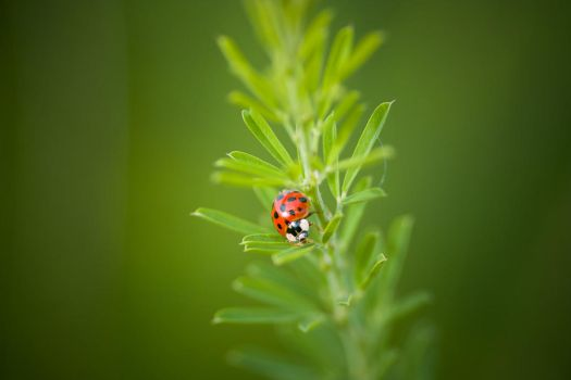 ladybug. by thespook