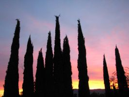 Silhouetted Cypresses by EuTytoAlba