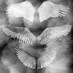 Wings - Photoshop Brushes by juliablanco