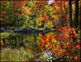 """Beaver Pond"" by WaitingForTheWorms"