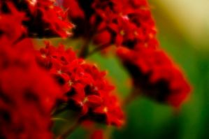 Explosion of Red by Tony-Lin