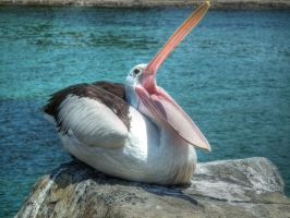 Pelican Widemouth by BrendanR85