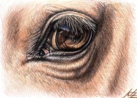 Horse Eye by ArtsandDogs