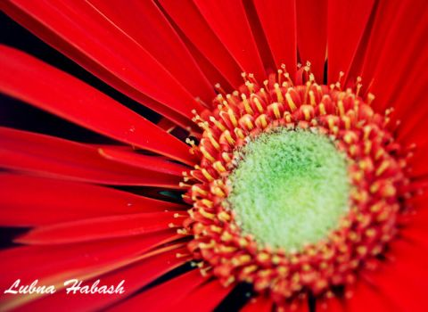 Flowers... by lubnahabash
