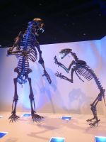 My time at the Houston museum part 2 by Joel-Cevallos