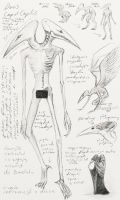 Anatomy of bird monster by Chimajra