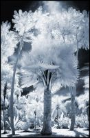 Tropical Garden V infrared... by MichiLauke