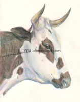 Nguni 2 by scaramouche2802