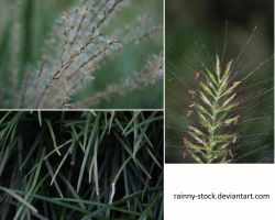 Grasses- pack- STOCK by Rainny-Stock
