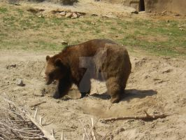 Grizzly Bear_O1 by Simply-Dreams