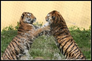 Water fun II by AF--Photography