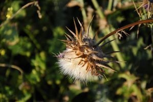 Thorny Flower by lironk