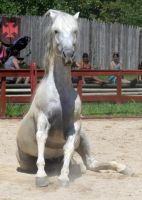 Andalusian Sit by roar-shack-stock