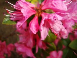 Pretty Little Pink by Gr8-Gatensby