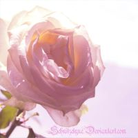 Rose by ElyneNoir