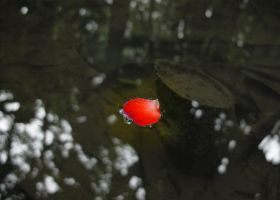 A Drop of Red... by MarcWasHere
