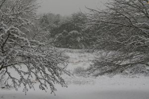 Snowy Trees and Field Stock 1a by Crematia18