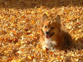 Teddy: In the Golden Leaves by The-Starhorse